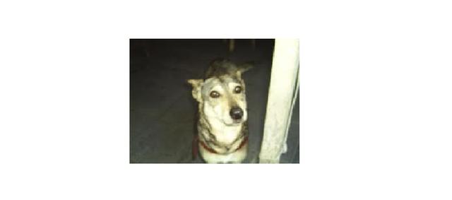 Maria Paz adota uma cadelinha da rua