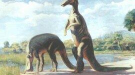 Paleoimagery timeline