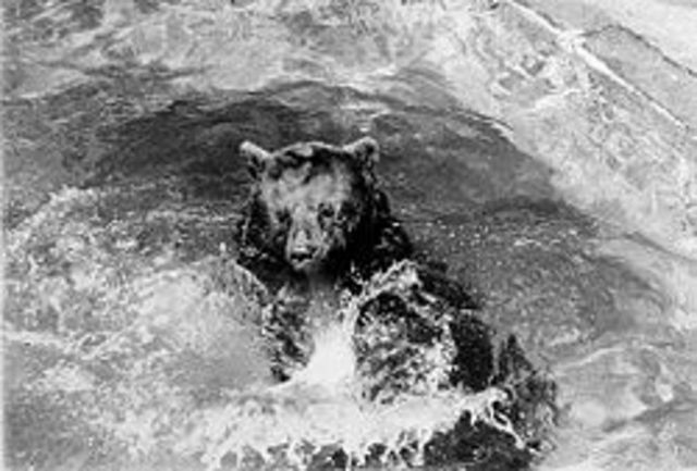 Smokey Bear's Death