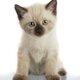 My favourite animal cat!
