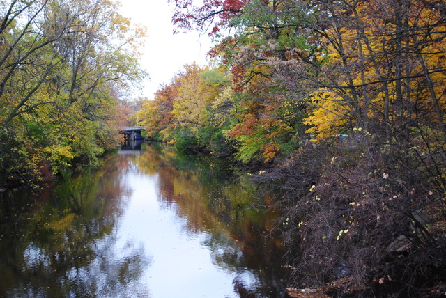 Red Cedar River Picture 6