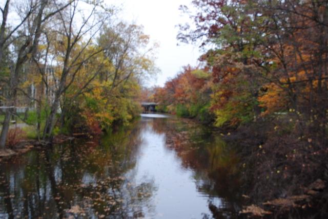 Red Cedar River Picture 7