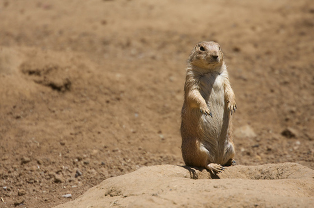 New animals found in the Great Plains