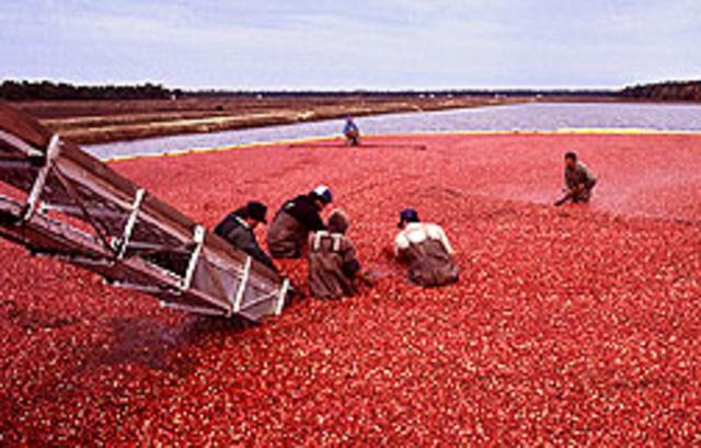 Cranberry UTI claim fails