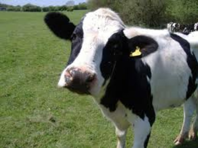 Mad Cow Disease in Europe