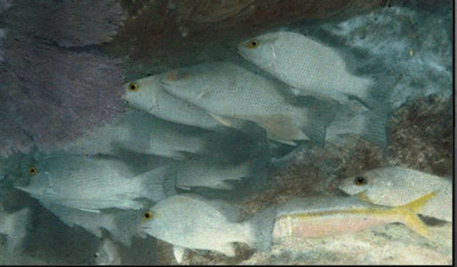 First coloured photo underwater