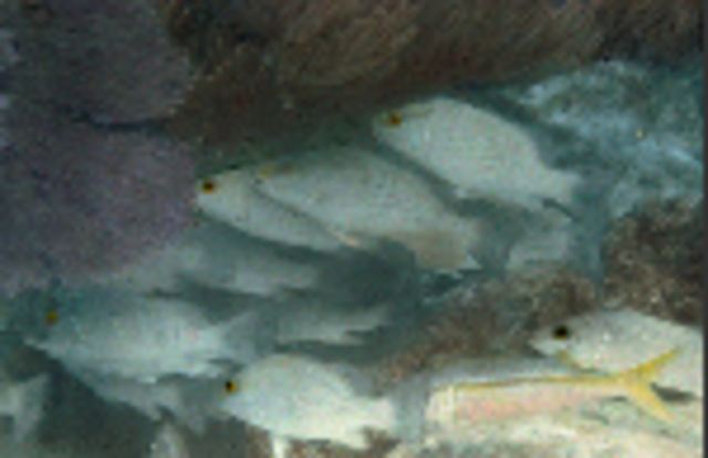 The first underwater colour photo was taken.