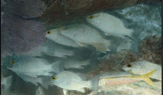 The First Underwater Colour Photo
