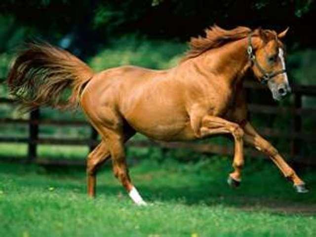 first rode a horse.