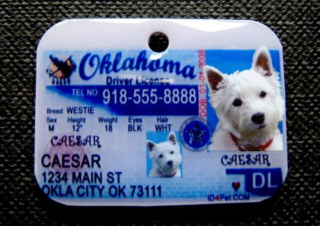 i got my driver`s license