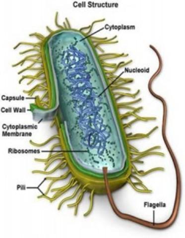 Bacteria Evolution