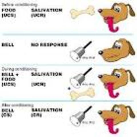 Ivan Pavlov coined the term conditioned reflexes