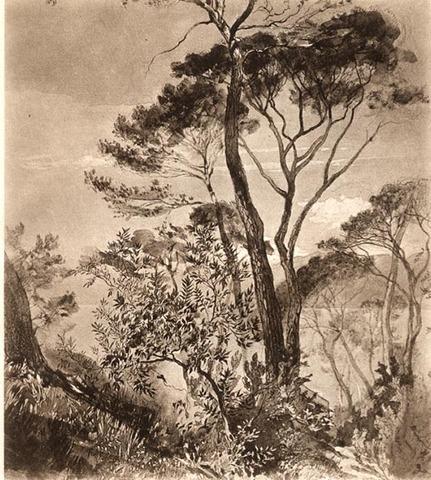 Study of Stone Pine at Sestri