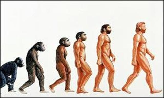 Desde simios hasta humanos