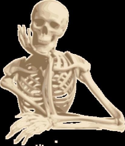 "11th grade- Read ""The Lovely Bones"""
