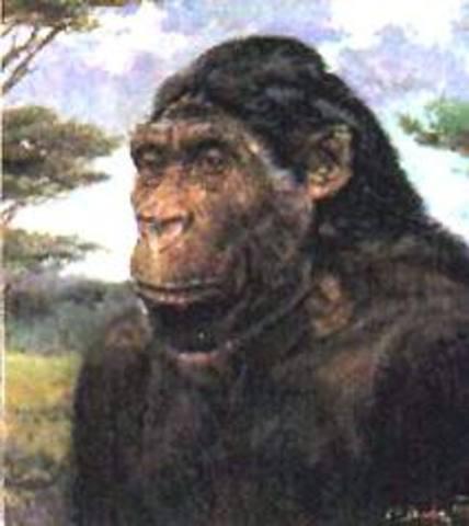 Astralopithecus africanus