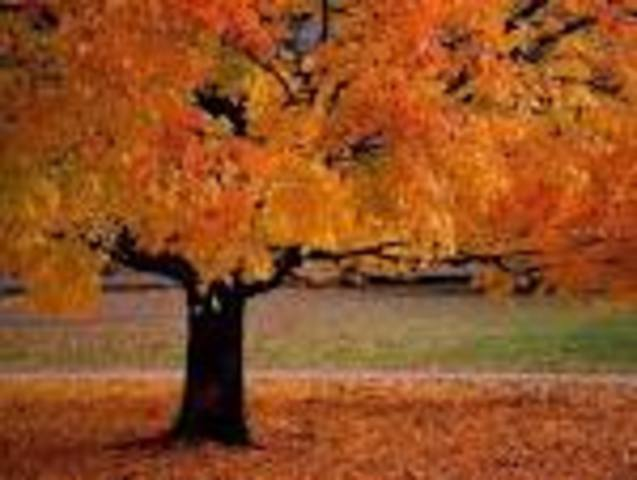 Park Day and Fall Social