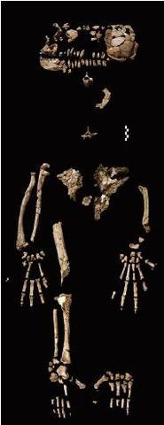 Ardipithecus kadabba  - 5.77/5.2 m.a.
