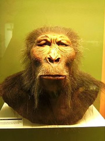 Paranthropus boisei  - 2.3/1.2 m.a.