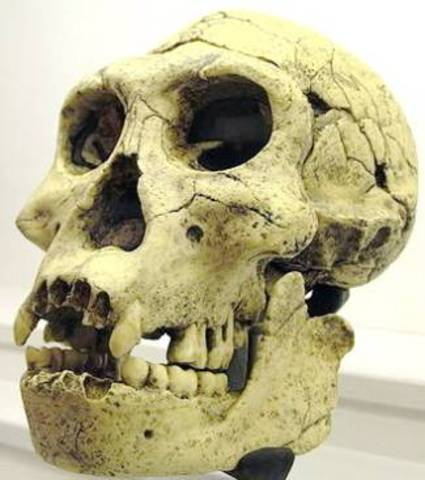 Homo georgicus   - 1.8 m.a.