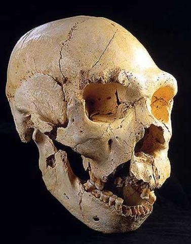 Homo antecessor  - 800000 años