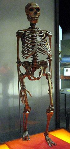 Homo neanderthalensis  - 230000/80000 años