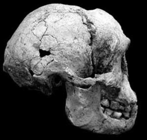 Homo floresiensis  - 74000 años