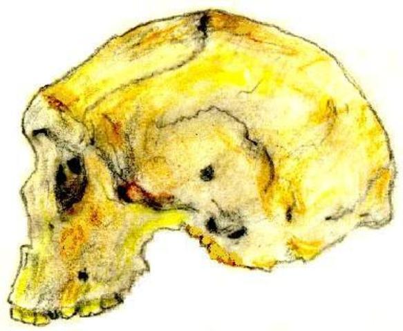 Homo rhodesiensis  - 600000/160000 años