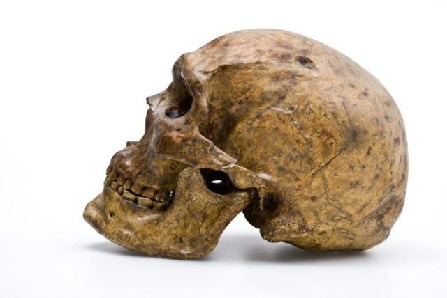 Homo sapiens  - 200000 años