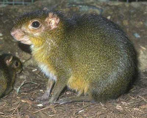 First Mammals Appear