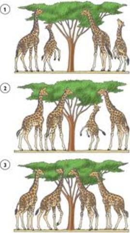 Teoría de selección natural