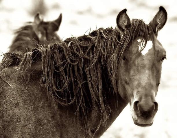 Yummy Horse!