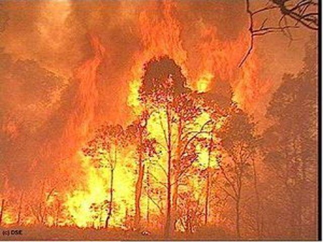 Melbourne Bushfires