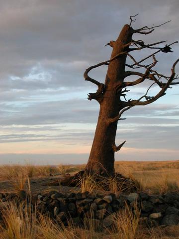 Clark Tree