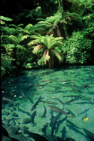 Rotorua rainbow springs