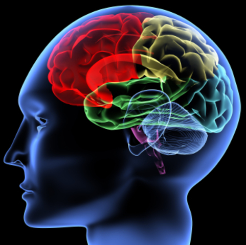 """Donald O. Hebb Publishes """"The Organization of Behaviour: A Neuropsychological Theory"""""""