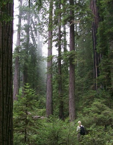 The Forest Reserve Act