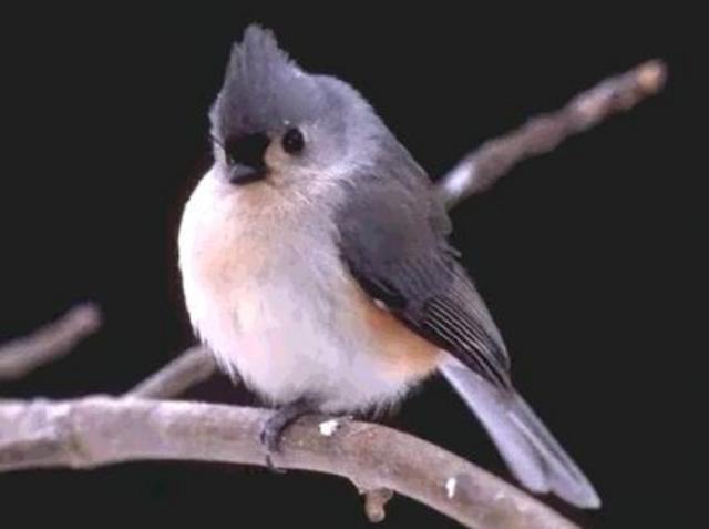 The Migratory Bird Treaty Act is signed