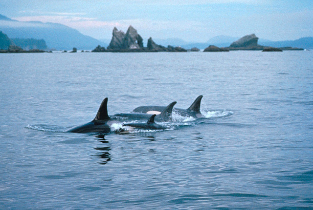Marine Protection, Research, and Sanctuaries Act passed