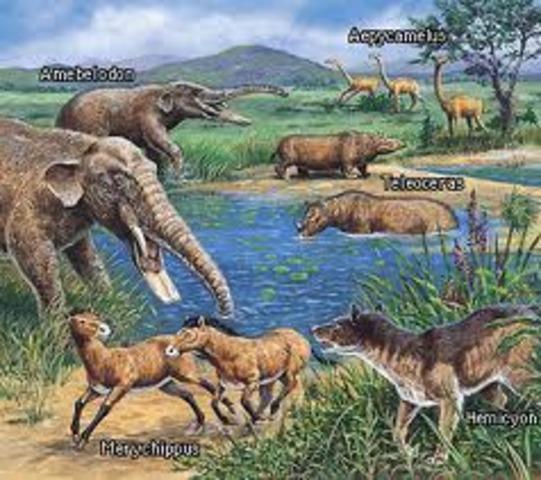 Cenozoic Era- The Age of Mammals - 65 MYA