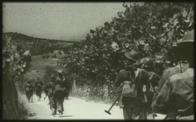 Allies land in Sicily.