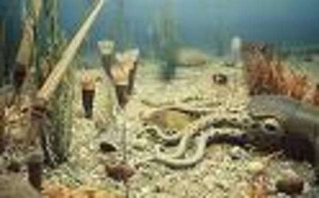 Ordovician 500-435 MYA