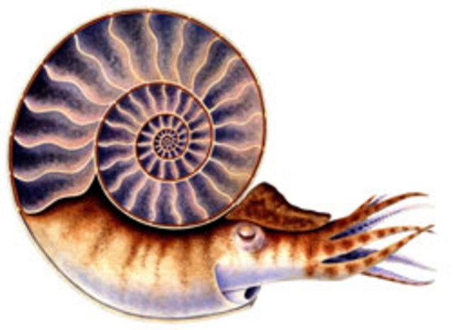 Devonian Period - 395-345 MYA