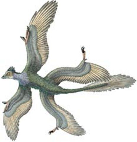 Jurassic Period - 195-136 MYA