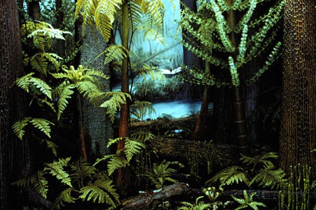 Carboniferous Period - 345-280 MYA