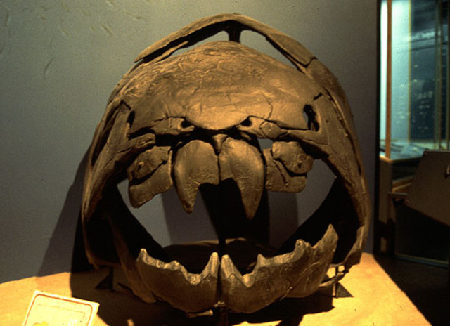 Ordovician-500-435MYA