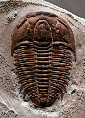 Cambrian Period-570-500MYA