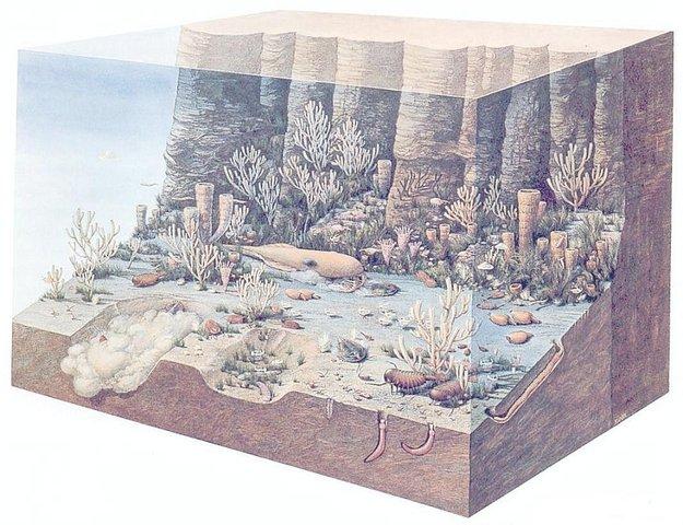 Cambrian Period 570-500 MYA