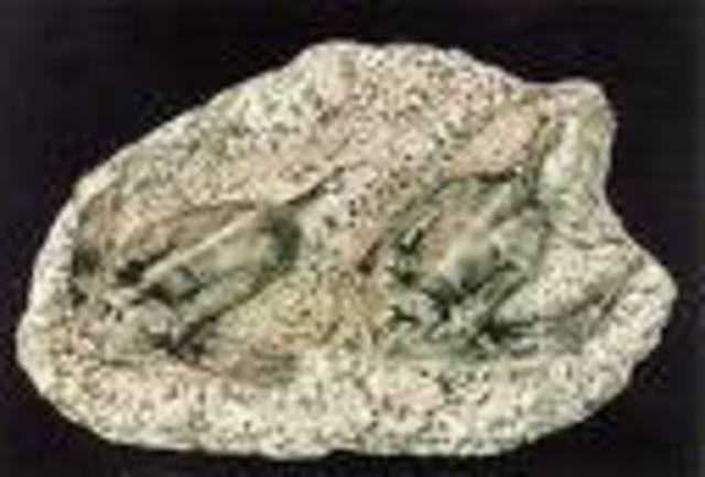 Devonian 395-345 MYA