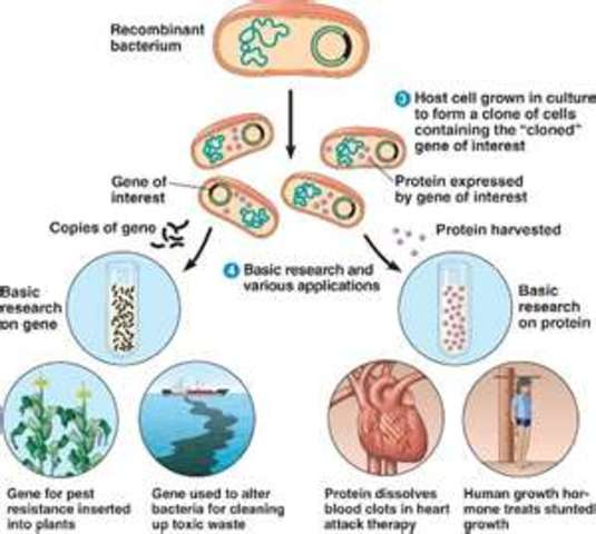First animal gene cloned